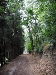 Camí sobre La Tet a Prada de Conflent - Photo of Campoussy
