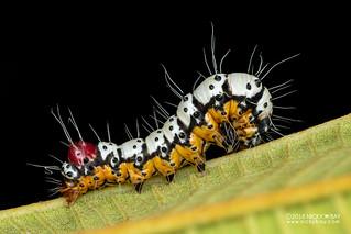 Caterpillar - DSC_6763