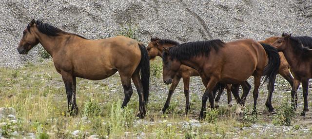 Wild Horse Provincial Park, Nikon D7200, AF-S VR Zoom-Nikkor 70-300mm f/4.5-5.6G IF-ED