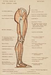 Vintage illustration of lower limb published in 1899 by James M Dunlop