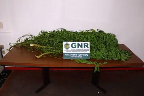 GNR Santarém - Apreensão (4)