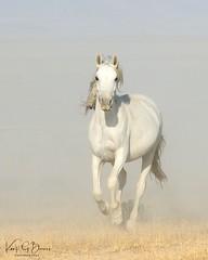 2018 Aug 16 Wild Horses