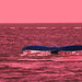 Whale in red by die Augen