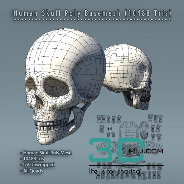 104 Human Skull Polygon Mesh V10 3d Mili Download 3d Model Free 3d Models 3d Model Download - free 3d models skull