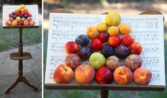 Symphony in Stone Fruit