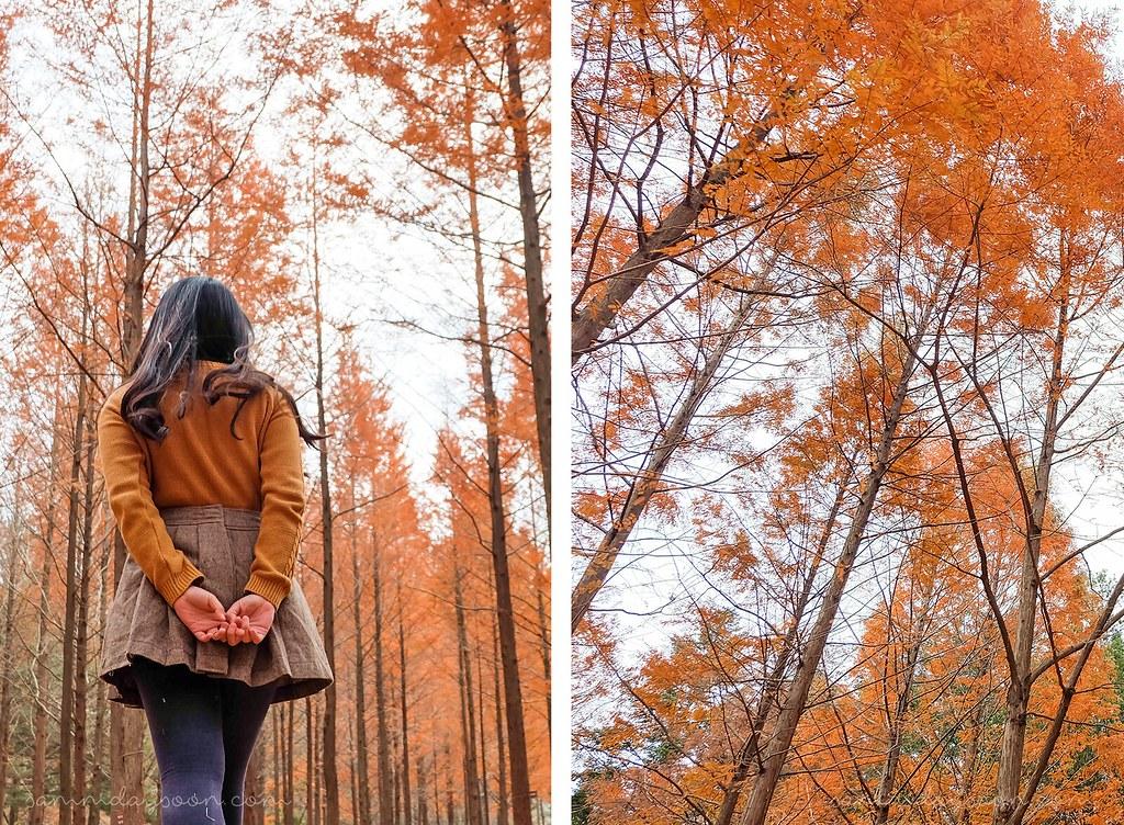 autumn_feels_nami_island