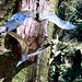 Barley, Aitken Wood - Pendle Sculpture Park., bats (4)