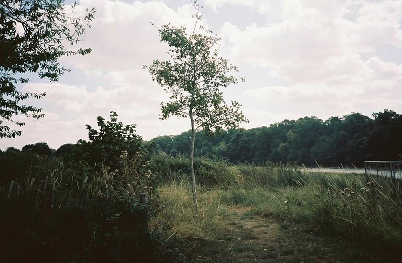 Shirehampton tree, on the bank of the Avon