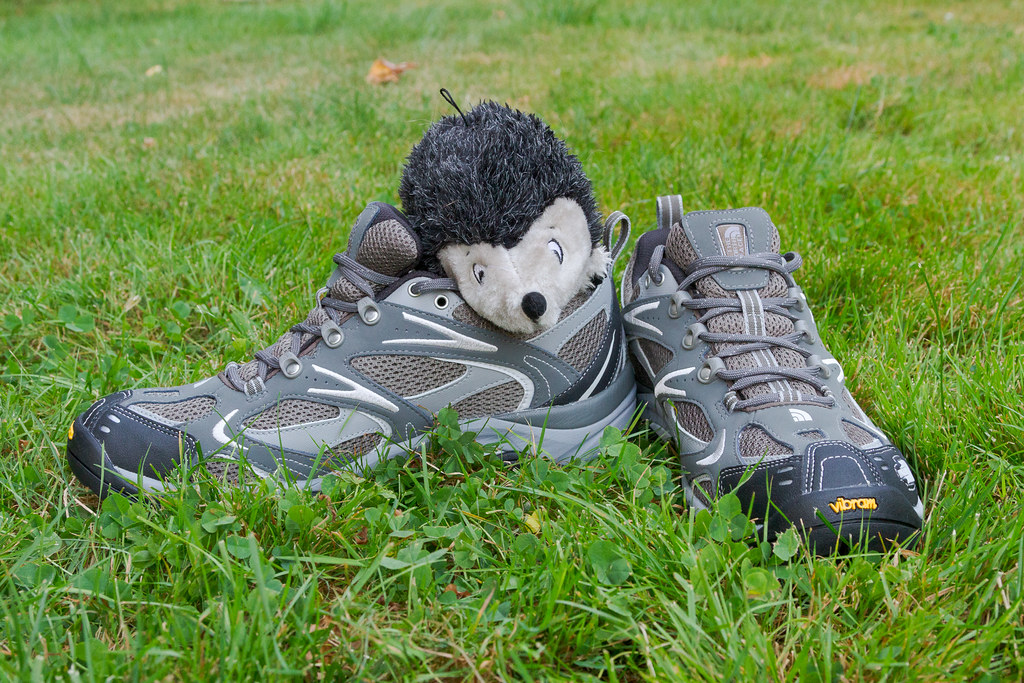 Our dog Ellie's toy hedgehog sitting on top of my North Face Hedgehog III hiking shoes