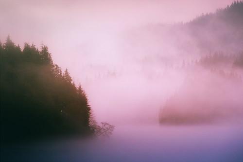 Pastel Lake Fog