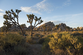 Sunset near Turtle Rock | by Joshua Tree National Park