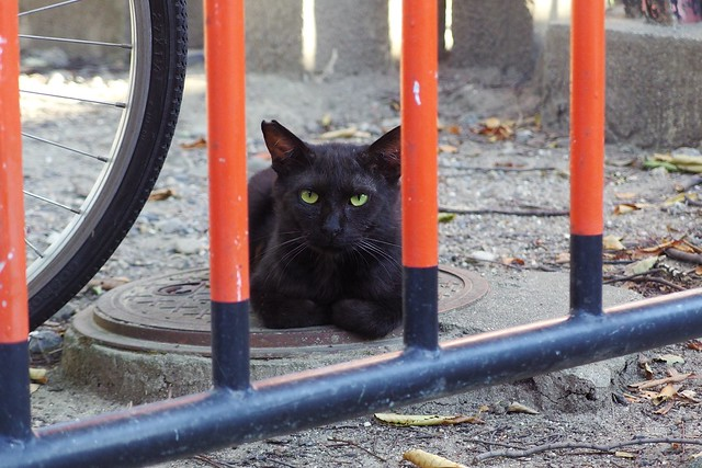 Today's Cat@2018-08-13