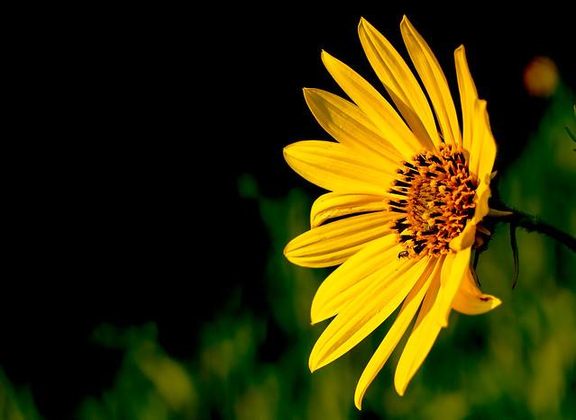 Wild-Flower-18-7D1-080918