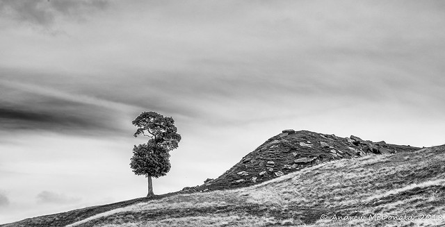Tree and hill, nr, Fujifilm X-T1, XF56mmF1.2 R