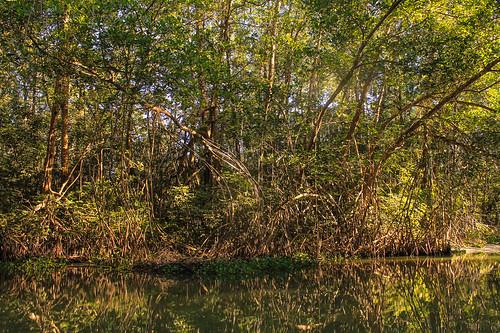 Río Arriba (62)