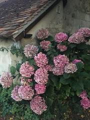 Photo Saint-Martin-du-Vieux-Bellême