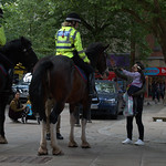 Police horses in Preston answering questions