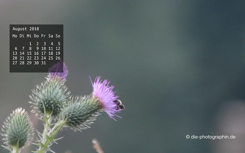 082018-distel-wallpaperliebe-diephotographin