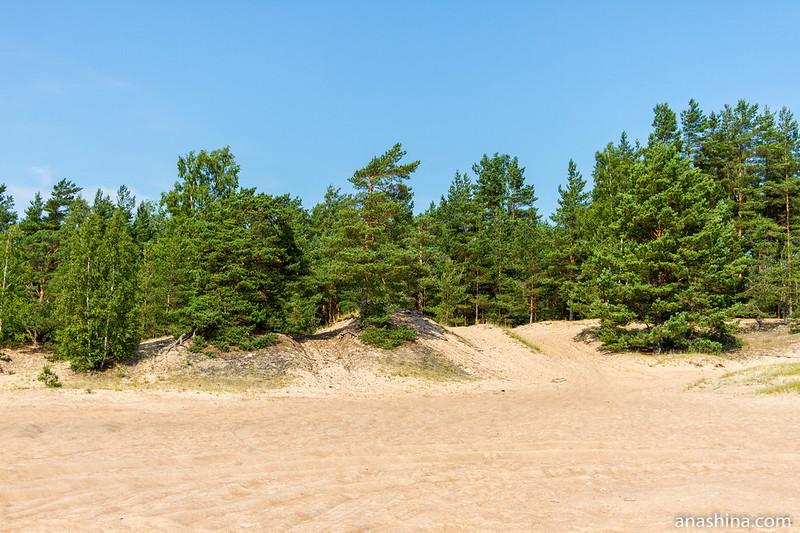 Прибрежная дюна, Балтийское море, Ленинградская область
