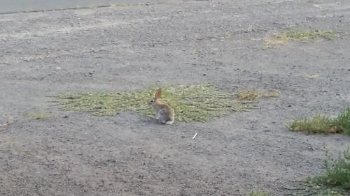 Go Bunny Go