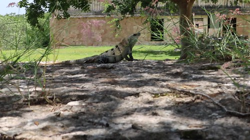 Lizards and the Governor's palace at Uxmal.