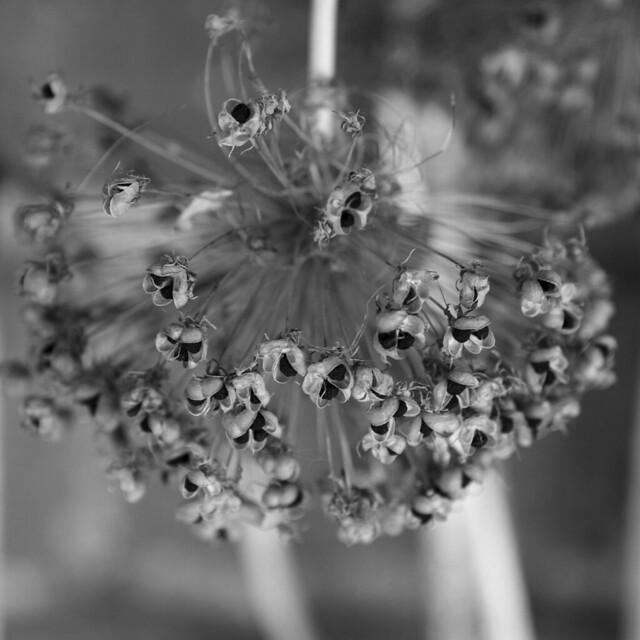 Flowers 002, Nikon D800, AF-S Nikkor 28-300mm f/3.5-5.6G ED VR