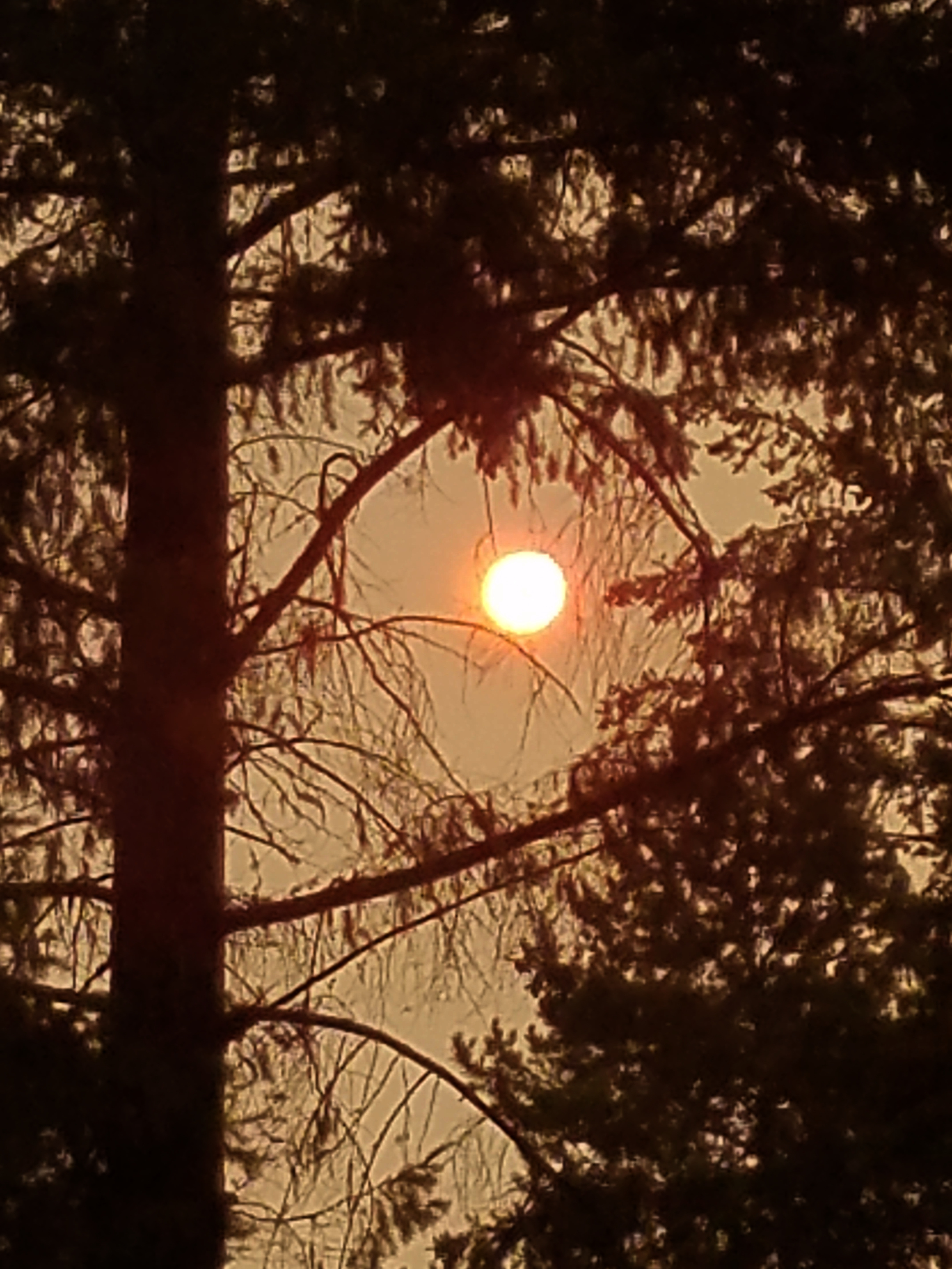 hazy sun from the fires in Eastern Washington | Tracy Marie Lewis | www.stuffnthingz.com
