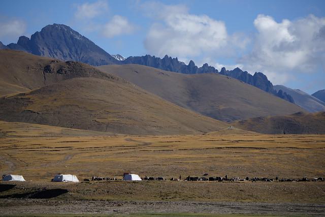 Nomads, Tibet 2017