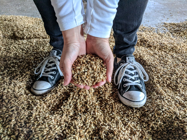 getting hands on with the sprouted grain