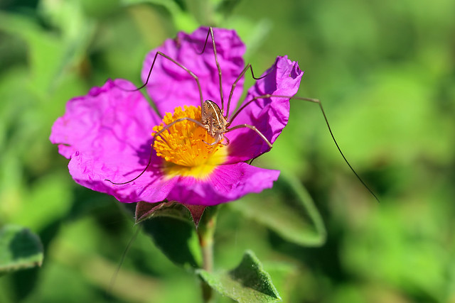 Flower with spider