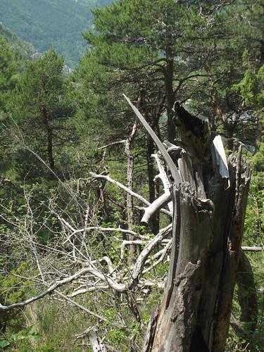 scenic tree