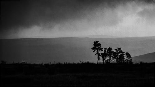 mountain trees in rain 6706 (philip hayman)