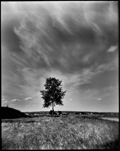 holga120s film tree sky plain söderfjärden