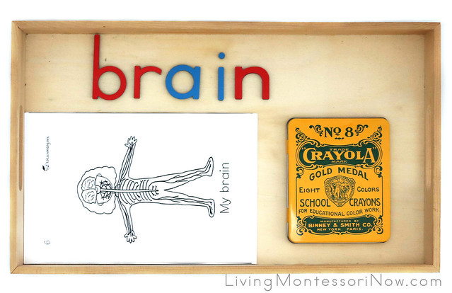 Brain Spelled with Movable Alphabet Letters and Brain Page for My Body Systems Book
