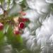 Cherries by GugisPhoto
