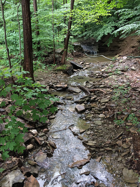 Freelings Creek at Johnson Estate
