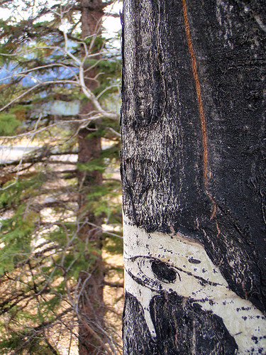 The bark of a Birch tree at Banff's Vermilion Lakes