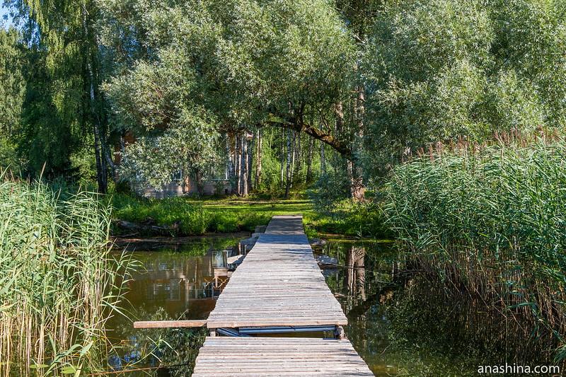 Серебристая ива, озеро Мстино