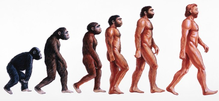 monkeytohuman (1)