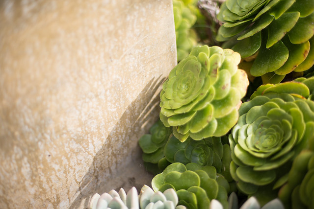 When the Succulent Sees Its Own Shadow