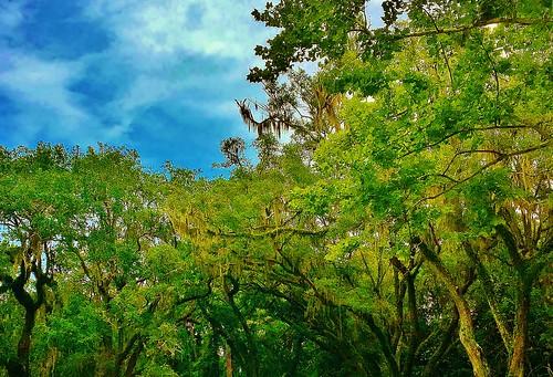 northwestflorida pointwashington thefloridapanhandle eden thesunshinestate florida