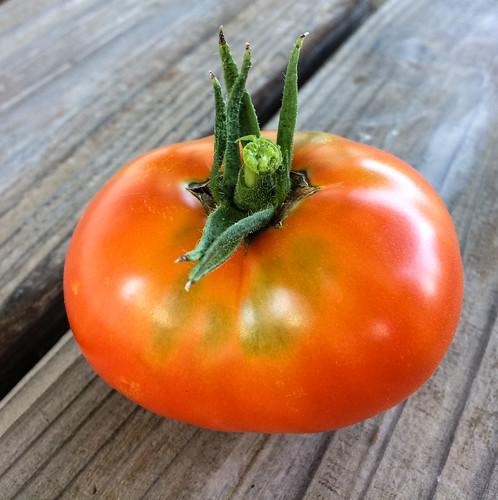 tomato-20180804-100