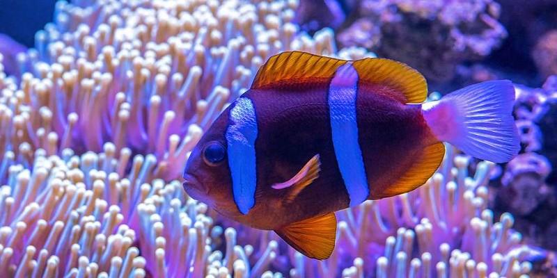 poissons-dans-la-mer-des-sargasses