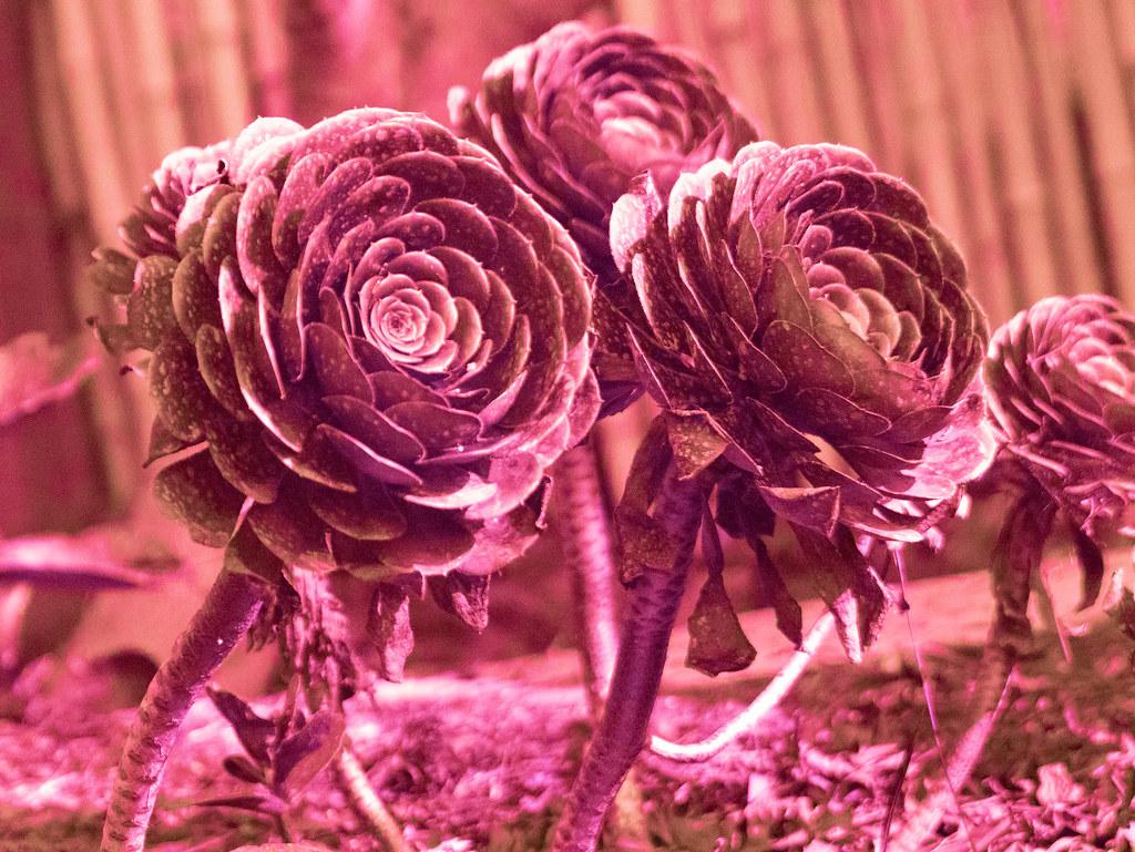 Plant (UV)