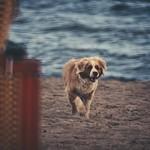 2018:08:26 17:02:37 - Dog Fun - Hundestrand - Ostsee - Schleswig-Holstein - Deutschland