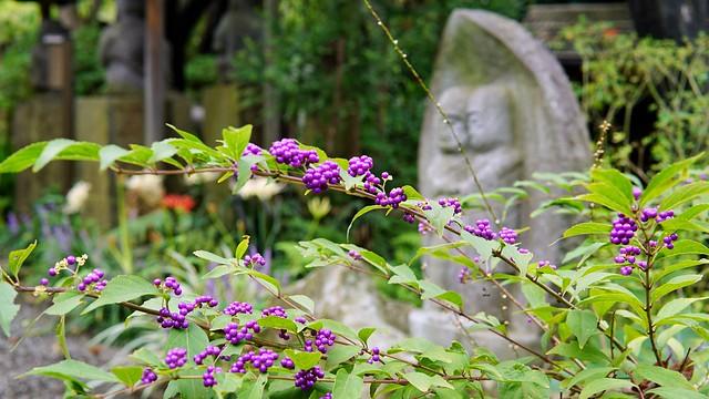 常泉寺(花寺)DSC00640-01