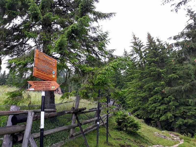 Drumetie in Piatra Craiului - Zarnesti-Creasta Nordica (5)