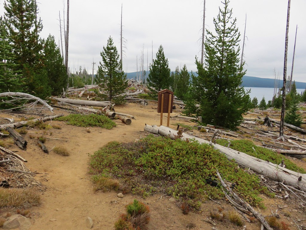Rigdon Lakes Trail junction with the Waldo Lake Shoreline Trail