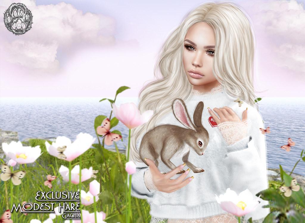 ... SpotCat ... Modest Hare - EXCLUSIVE - TeleportHub.com Live!