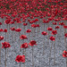Imperial War Museum poppies